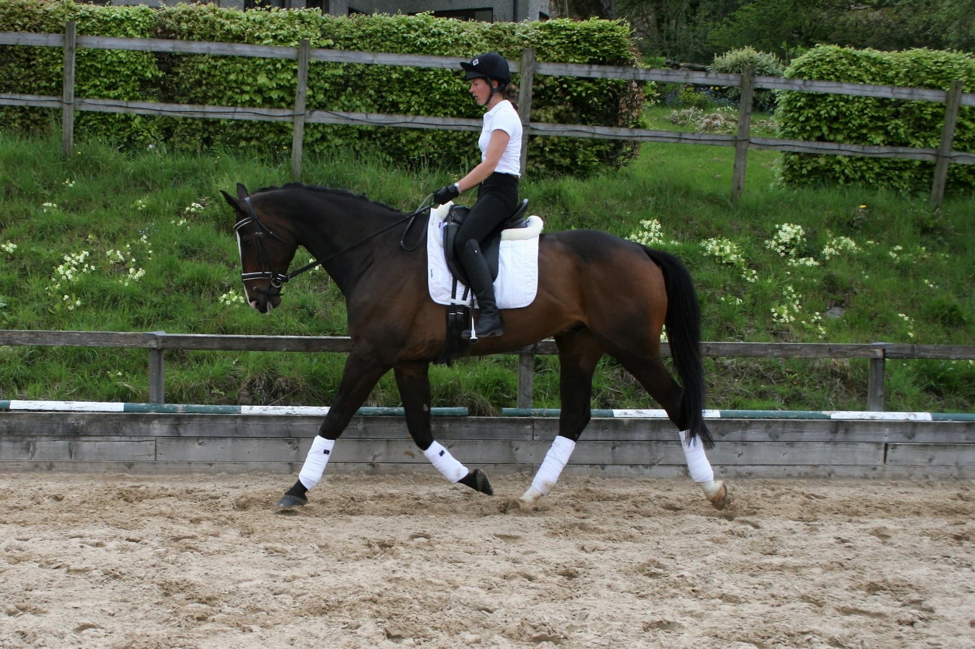 Nina Boex Dressage Clinic Saturday 9th March